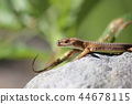 reptile reptilian animal 44678115