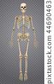 Realistic Human Skeleton 44690463