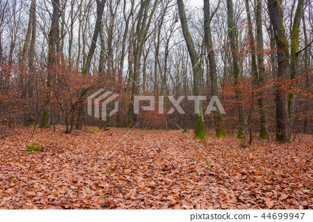lonely walks in empty naked forest 44699947