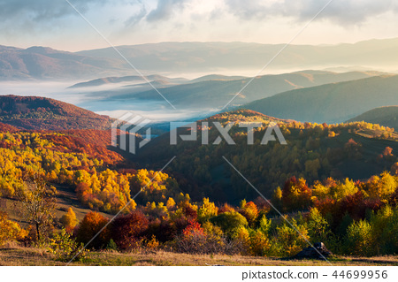 beautiful foggy autumn landscape 44699956