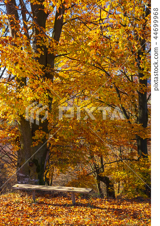 handmade wooden bench under the tree 44699968