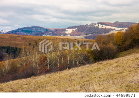 row of naked trees on a hill with weathered grass 44699971