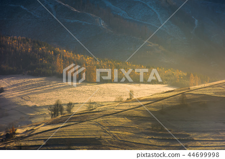 forest on hill in golden light and haze 44699998