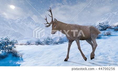 deer 44700256