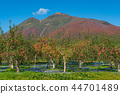 iwaki mountain, apple, autumnal 44701489