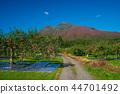 iwaki mountain, apple, autumnal 44701492