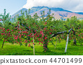 iwaki mountain, apple, autumnal 44701499
