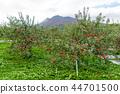 iwaki mountain, apple, autumnal 44701500