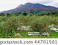 iwaki mountain, apple, autumnal 44701501