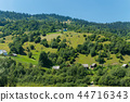 Green meadows with tall trees and thick grass. And 44716343
