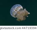 Jellyfish lake in Togian island 44719394