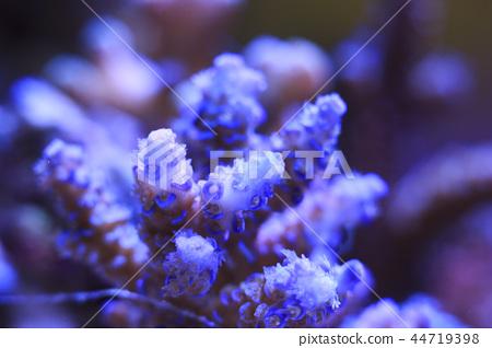 Acropora coral 44719398