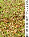 fallen, leafe, falling 44721505