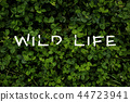 Typografy poster of clover grass, top view 44723941