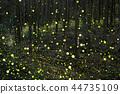 หิ่งห้อย,แสง,เบา 44735109