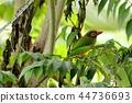 ป่า,สวน,เขตร้อน 44736693