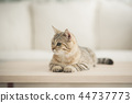Cute cat lying on wooden table in living room 44737773