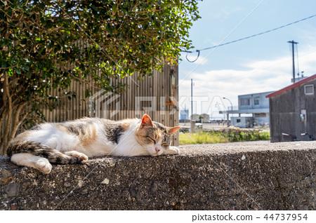 在Aoshima的貓 44737954