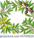 olive branch fruit 44740836