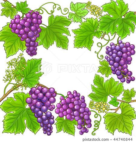 grapes vector frame 44740844