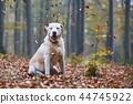 Dog in autumn forest 44745922