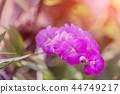 Beautiful pink orchid  with blurred background 44749217