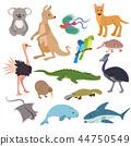Australian animals vector animalistic character in wildlife Australia kangaroo koala and shark 44750549