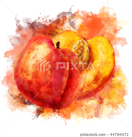 Peach on white background. Watercolor illustration 44760472