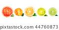Watercolor orange, lemon, citrus, mandarin, grapefruit and lime 44760873