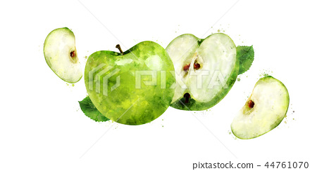 Green Apple on white background. Watercolor illustration 44761070