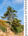 French landscape - Bretagne 44768409