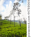 tea, plantation, tree 44769069