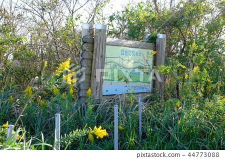 하스 누마 해변의 숲 지바 현립 누마 해변 공원 44773088