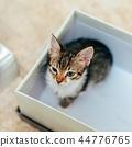 cat, kitten, pet 44776765