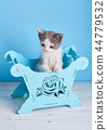 고양이, 새끼, 애완동물 44779532