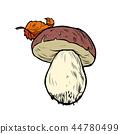 蘑菇 食物 食品 44780499