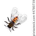 Watercolor honey bee 44780739