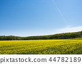 One side of rape blossoms and blue sky (+ contrail) 44782189