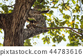 Brown squirrel stand and jump on tree 44783616
