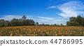 Orange pumpkins at outdoor farmer market 44786995