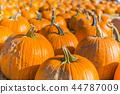 Orange pumpkins at outdoor farmer market 44787009