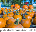Orange pumpkins at outdoor farmer market 44787010