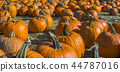 Orange pumpkins at outdoor farmer market 44787016