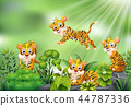 animal, tiger, character 44787336