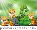animal, tiger, character 44787342