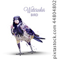 Crow with a nut watercolor Vector. Fall season 44804802