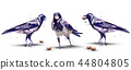 Crows watercolor Vector. Isolated birds on white 44804805