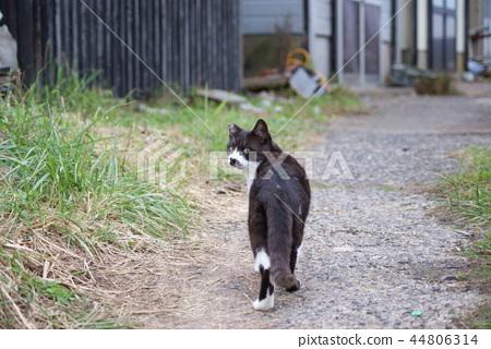 아키타 현 니카 호시 象潟 어항의 도둑 고양이의 생활 44806314