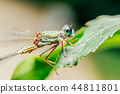 dragonfly macro nature 44811801
