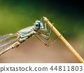 dragonfly macro nature 44811803
